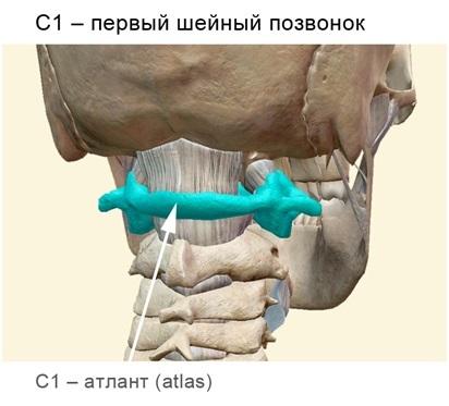 Отделы спинного мозга: шейный, поясничный, грудной, шейный