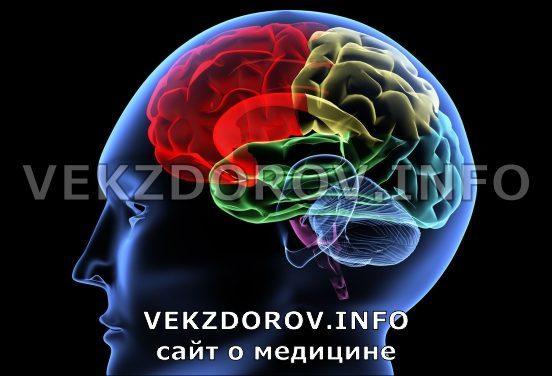 Асимметрия боковых желудочков мозга: причины, симптомы, лечение