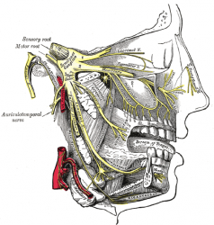Неврит тройничного нерва: лечение и профилактика