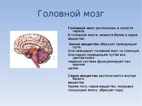 Лейкоэнцефалопатия головного мозга: симптомы и лечение заболевания
