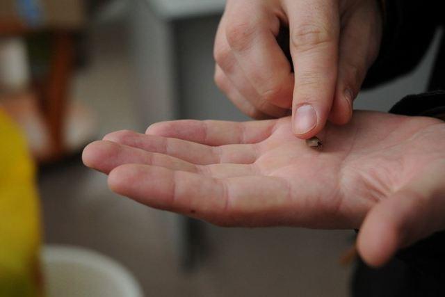Клещевой энцефалит: формы заболевания, его возбудитель и лечение