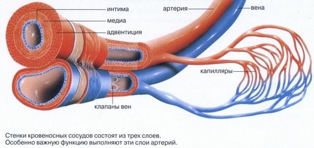Тонус сосудов головного мозга: гипертония и гипотония