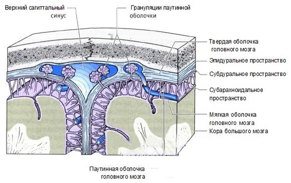 Расширение субарахноидального пространства у грудничков