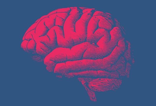 Работа мозга человека: принципы и интересные факты