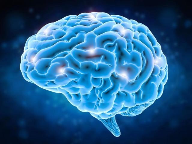 Продолговатый мозг человека: строение, функции, задачи