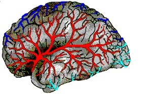 Заболевания головного мозга: классификация нарушений