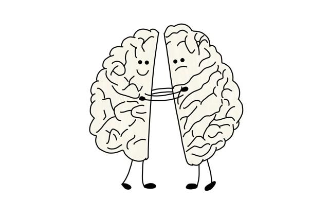 Асимметрия мозга: функциональные отличия у женщин и мужчин