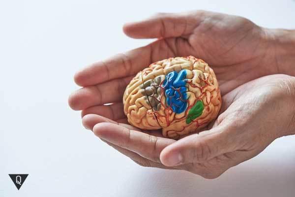 Потенциал мозга: как раскрыть и исопльзовать все его возможности