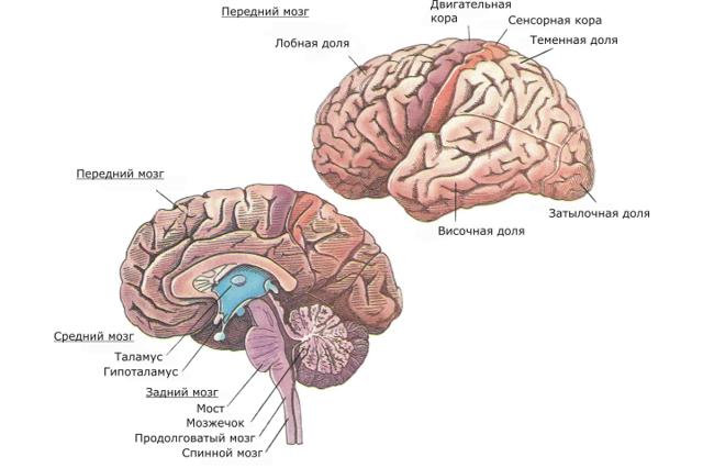 Гимнастика для развития памяти у детей и взрослых людей