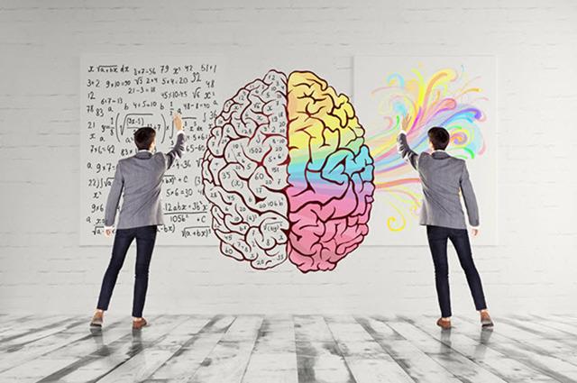 Полушария мозга: функции, строение, основные отличия