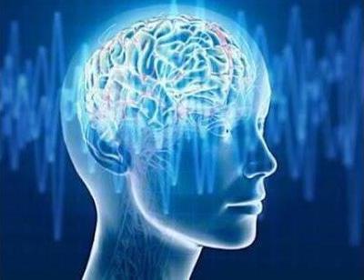 Альфа-активность головного мозга: что это такое?