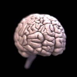 Маленький мозг у человека: к чему может привести