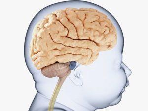 Мозг ребёнка: развитие ГМ в течение первых лет жизни