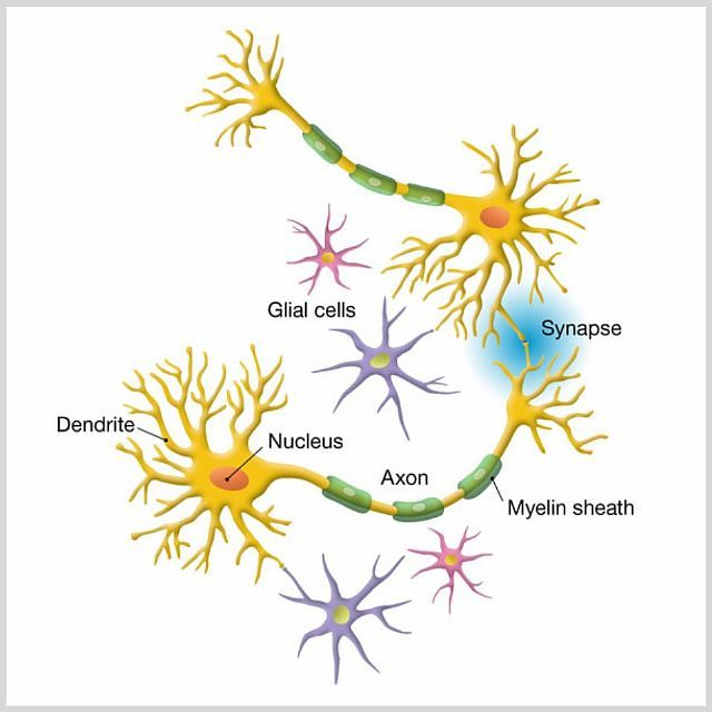 Очаги глиоза и причины их появления в человеческом головном мозге