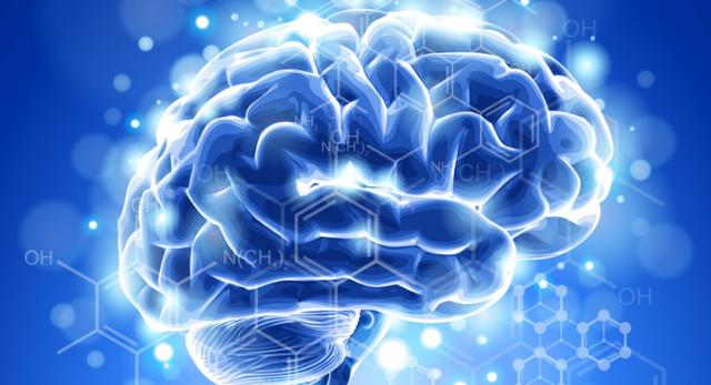 Типы нервной системы, их основные свойства и различия