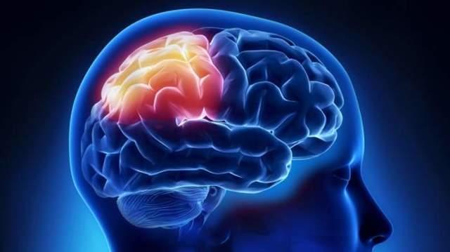 Борозды и извилины: порерхность коры головного мозга